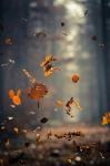 Vallende bladeren.jpg