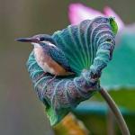 Blauwe vogel in bloem.jpg