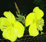 Gelebloemen HdS16082016.jpg