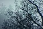 Bomenlicht.jpg